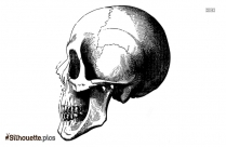 Skull Profile Silhouette Image And Vector