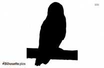 Smart Owl Cartoon Silhouette Background