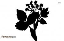 Radish Leaf Silhouette Background