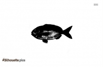 Ling Cod Filet Silhouette Picture