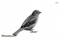 American Robin Bird Silhouette Art