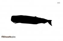 Orca Killer Whale Clipart