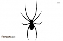 Freaky Giant Spiders Picture Silhouette