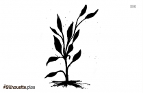 Stalk Bamboo Plants Silhouette Drawing