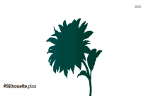 Sunflower Pic Silhouette
