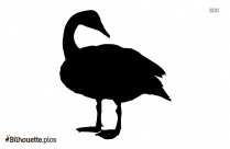 Alpha Swan Background Silhouette