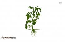 Cactus Plant Clip Art Silhouette