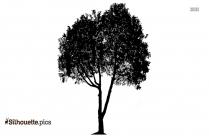 Plumeria Tree Silhouette Vector And Graphics