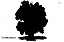 Spruce Tree Clipart Silhouette