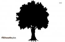Santa Cruz Tree Silhouette