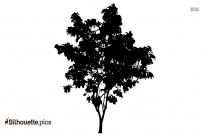 Tree With Roots Silhouette Drawing