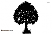 Coffee Tree Silhouette Image And Vector