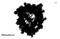 Image Of Single Tree Silhouette