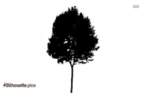 Tree Drawing Silhouette Background