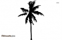 Palm Tree Leaf Clipart Silhouette Image