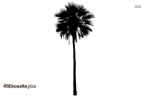 Tropical Trees Silhouette Image
