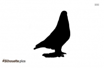 Vulture Drawing Silhouette Drawing
