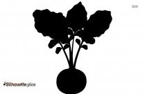 Roman Cauliflower Silhouette