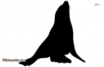 Seashell Drawings Silhouette Image