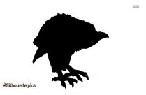 Macaw Transparent Silhouette