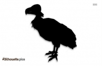 Black And White Macaw Silhouette