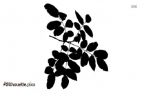 Black Big Leaf Drawing Silhouette Image