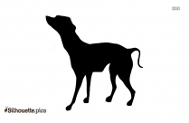 Bernese Mountain Dog Image Silhouette