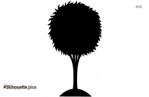 Tree Drawing Silhouette Clipart Drawing
