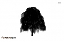 Willow Tree Silhouette Png