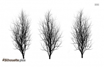 Fall Trees Silhouette Image