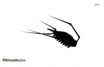 Woodlouse Silhouette Black And White
