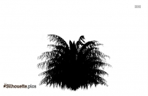 Yew Leaf Clipart || American Yew Tree Silhouette