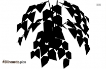 Yew Tree Leaves Silhouette