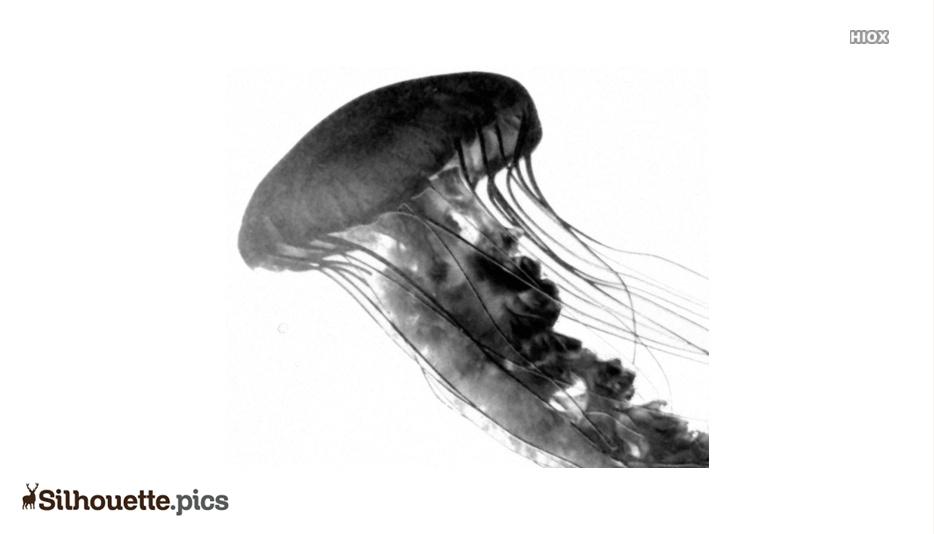 Transparent Jellyfish Silhouette Art