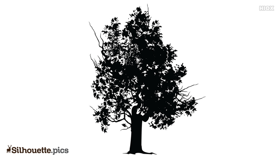 Black and White Tree Silhouette Image