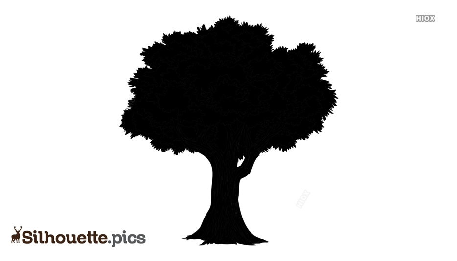 Big Tree Silhouette Images, Pictures