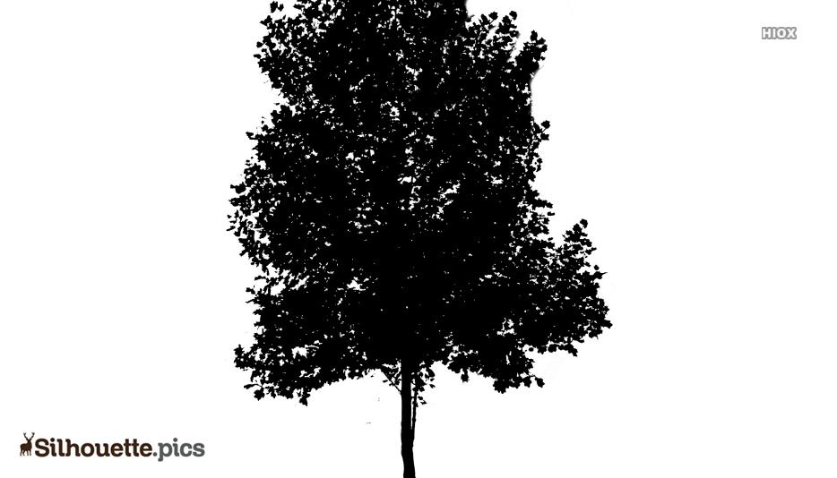 Tree Texture Silhouette Clip Art