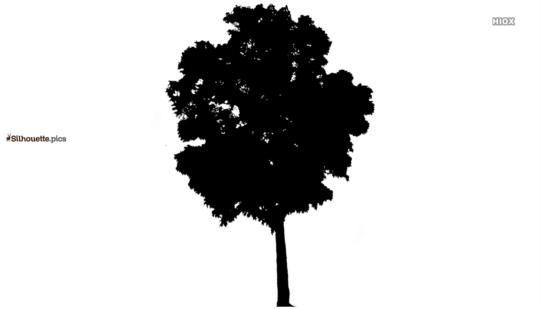 Tropical Tree Symbol Silhouette