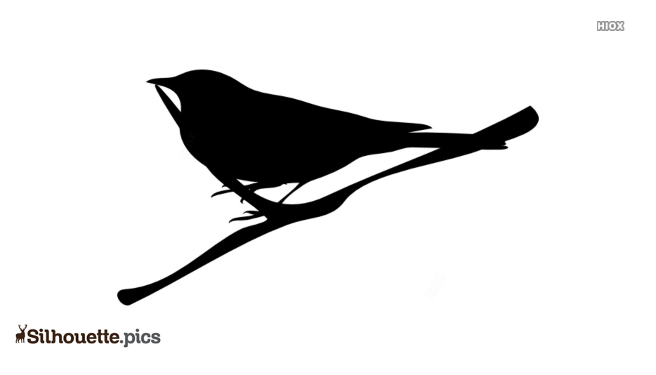 Twig Silhouette Picture