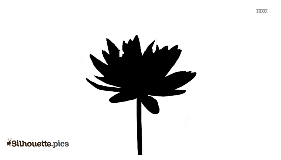 Water Lily Flower Silhouette Free Vector Art