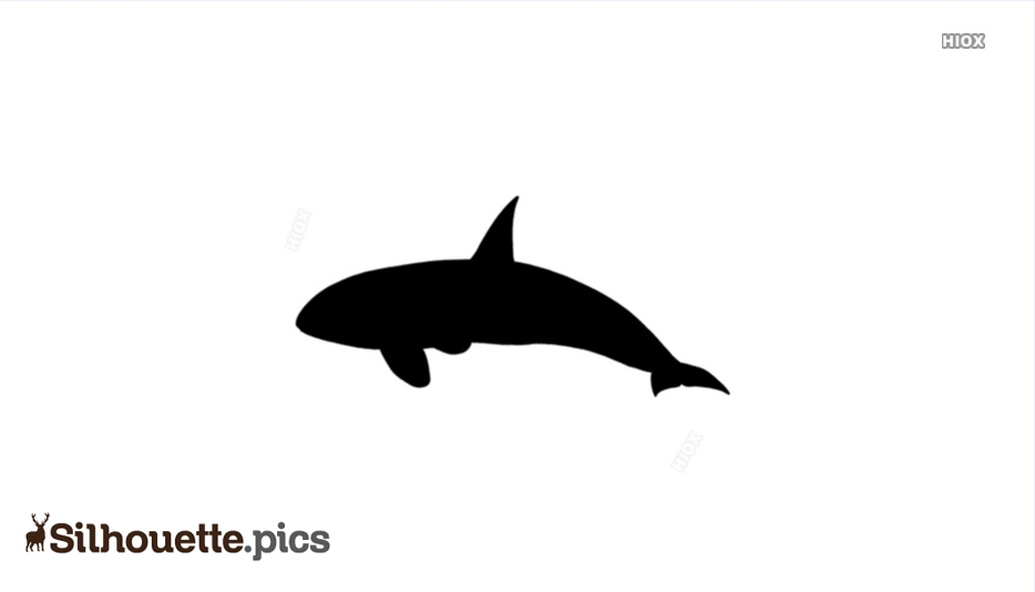 Whale Fish Silhouette
