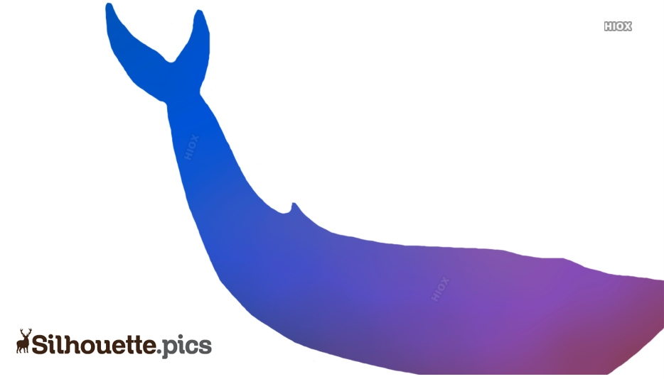 Whale Silhouette Image