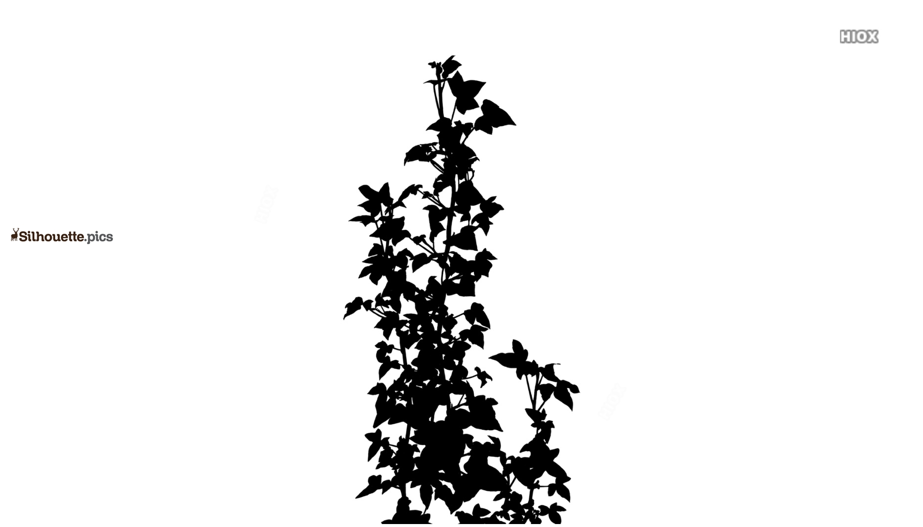 Wild Vines Silhouette Image