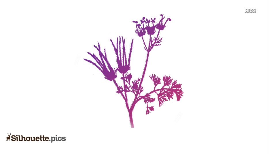 Wildflower Drawings Silhouette Clip Art