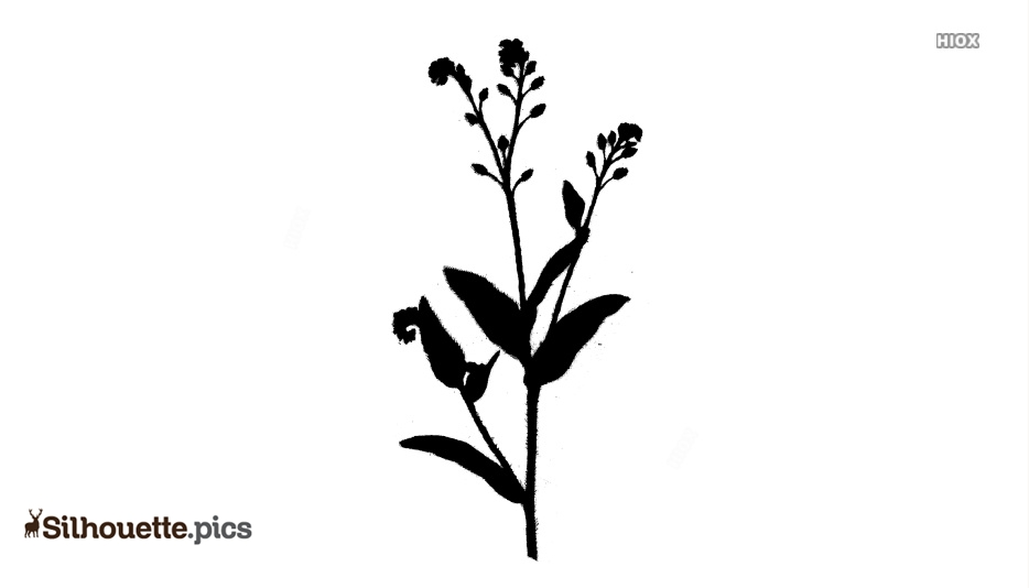 Wildflower Silhouette Vector, Clipart Images, Pictures