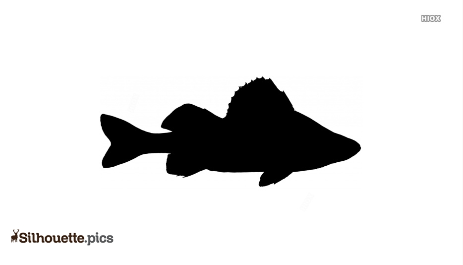 Yellow Perch Silhouette Clipart Vector Free Download